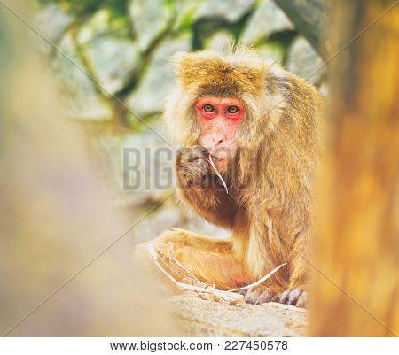 Monkey eats bark behind the trees