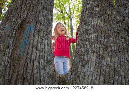 Four Years Age Blonde Child With Red Shirt And Blue Jeans Looking And Laughing Between Trunks Of Che