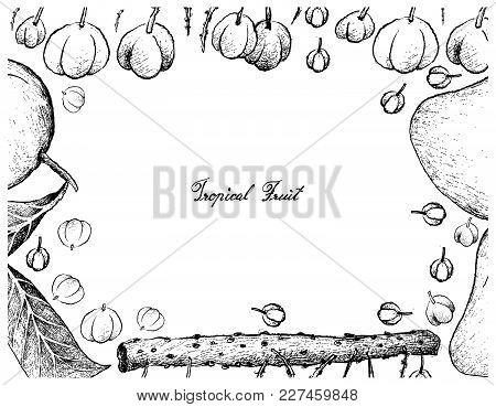 Tropical Fruits, Illustration Frame Of Hand Drawn Sketch Fresh Otaheite Gooseberries Or Star Goosebe
