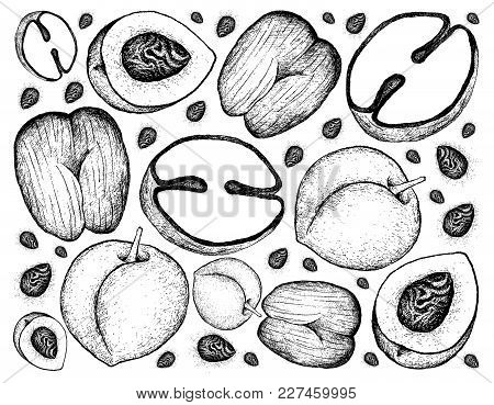 Tropical Fruits, Illustration Wall-paper Background Of Hand Drawn Sketch Peach, Nectarine Or Runus P
