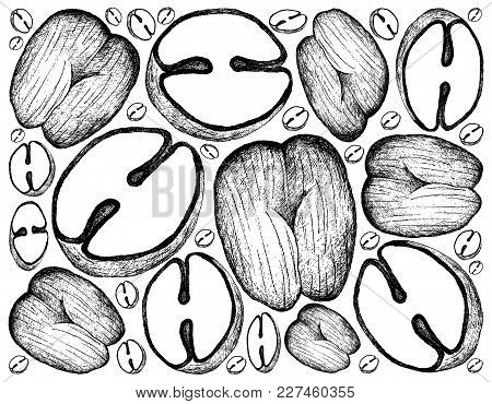 Tropical Fruits, Illustration Wall-paper Background Of Hand Drawn Sketch Coco De Mer Or Double Cocon
