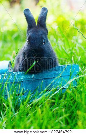 Black Rabbit Wattled Basket Green Grass Easter