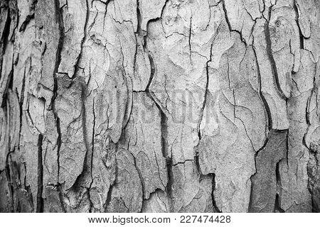 Bark, Wooden Texture Background, Brown Tree Bark Background. Texture.