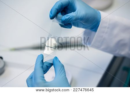 Lab assistant preparing microscope slide for scrutiny in laboratory