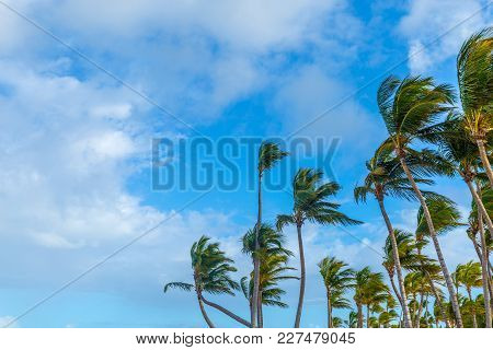 Palm Trees Against The Sky Of The Caribbean Islands. Dominican Republic, Punta Cana.