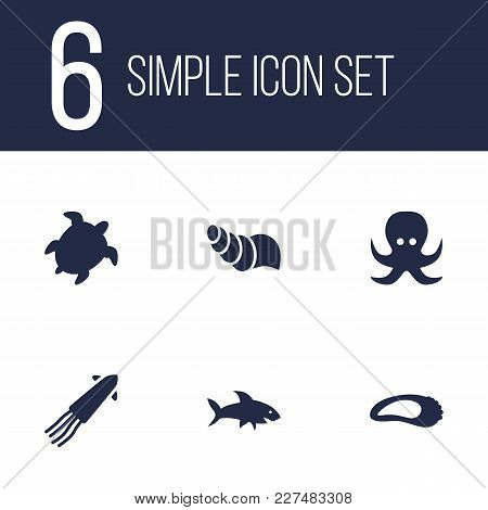 Set Of 6 Seafood Icons Set. Collection Of Clam, Calamary, Shark And Other Elements.