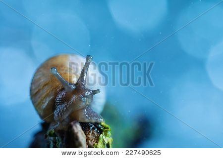 A Snail Looks Up In A Fairy Forest