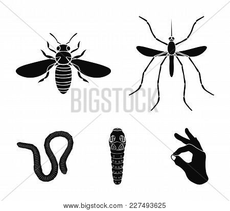Worm, Centipede, Wasp, Bee, Hornet .insects Set Collection Icons In Black Style Vector Symbol Stock