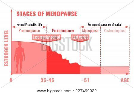 Stages And Symptoms Of Menopause. Estrogen Level Average Percentage From The Birth To The Age Of Eig