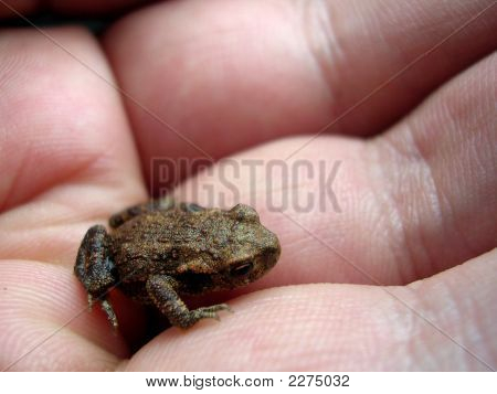 holding with my hand little and cute tree frog poster