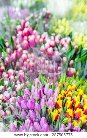 Beautiful Multicolored Flower Bouquets. Various Fresh Tulips At Flower Shop. Wholesale Or Retail Flo
