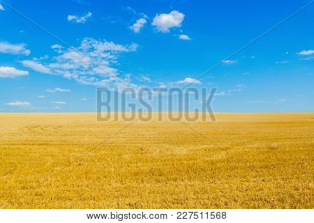 View Of Straw Field After Harvest With Blue Sky And Clouds. Gold Wheat Field In Summer. Agriculture