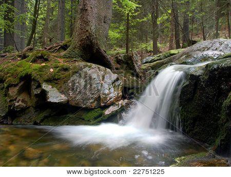 mountain spruit in Bohemia
