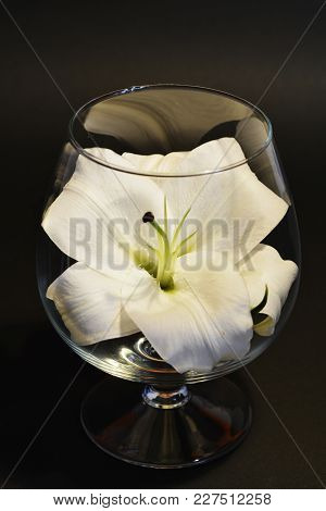 Close-up Delicate Flower White Lily In A Wine Glass On Black Background Studio