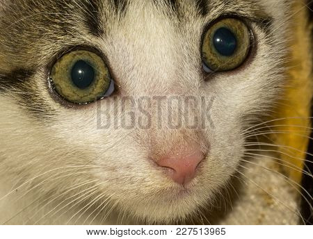 Action Animal Themes Cat Close-up Cute Cat Domestic