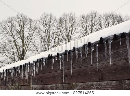 Icicles On Roof On Dark Brown Wooden Wall Background And Old Trees Behind. Climate Changes Signs In