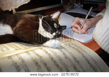 Girl's Hand Writes In A Notebook And A Black And White Cat Is Lying On The Musical Notes On The Tabl