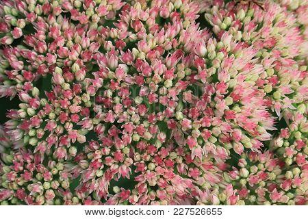 Unknown Flower Background