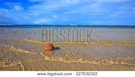 Coconut On A Beautiful Caribbean Beach.travel Background.