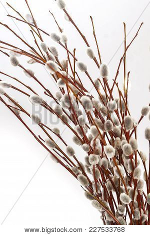 Branches And Bouquet Of Willow Isolated On White Background
