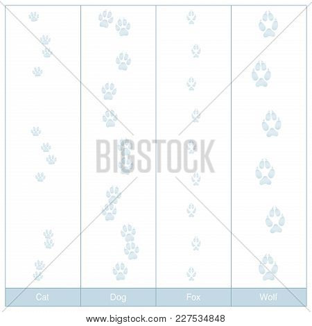 Tracks Of Dog, Cat, Fox And Wolf. Carnivore Paw Prints In Snow To Compare - Isolated Vector Illustra