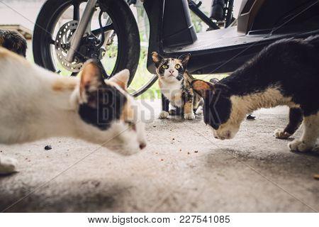 Feed The Kitten, Homeless, Poor, Rarely Eat