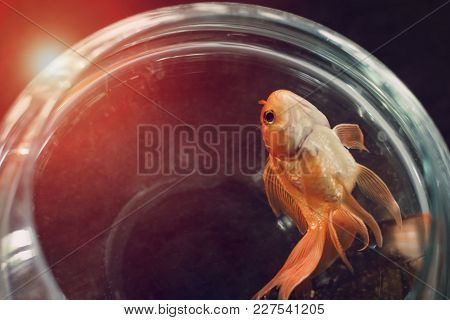 Dead Fish On Clear Glass On Black Table Light