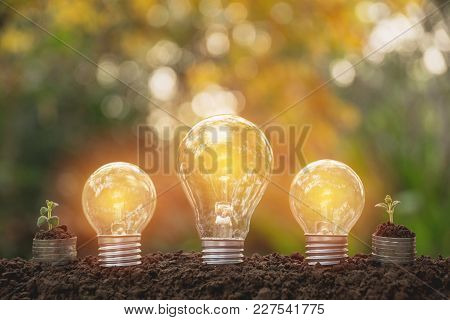 Energy Saving Light Bulb And Tree Growing On Stacks Of Coins On Nature Background. Saving, Accountin