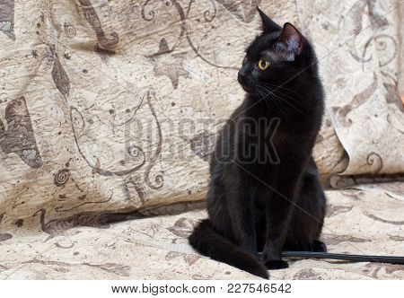 Black Young Cat Sitting On A Sofa.
