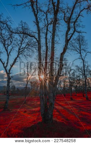 Red Floor Forest In Oroville Ca. With Sunburst