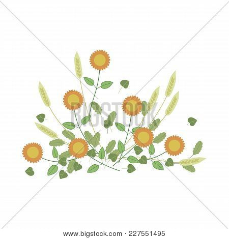 Calm Colour Composition Of Yellow Flowers Of Spikelets On White Background