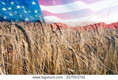 Wheat field in sunny afternoon light, American flag in the backgroun - Nutrition food concept