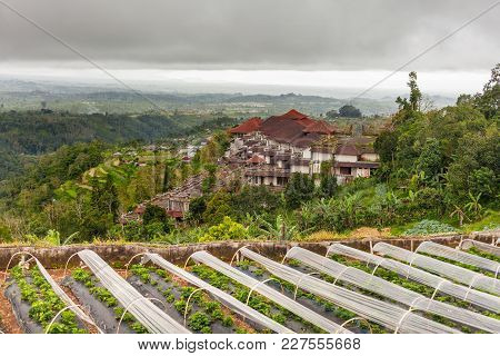 Panorama View On Building In Village And Agricultural Rice Fields On Hill. Plantations Of Strawberri