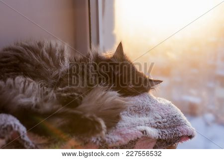 The Cat Sleeps On The Window, Basking In The Sun