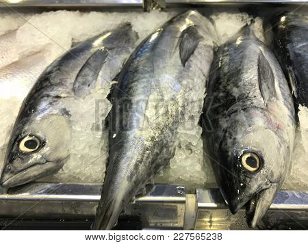 Display of fresh batang mackerel fish on ice in a fishmonger for sale.