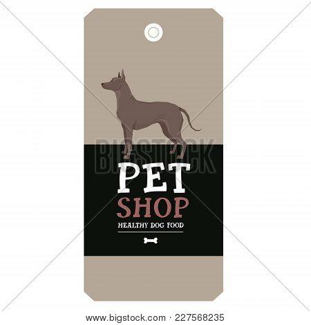 Poster Pet Shop Design Label Xoloitzcuintli Mexican Hairless Dog Geometric Style Set