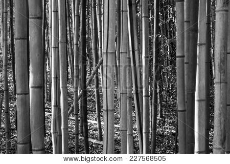 A Dense Bamboo Forest In The Unlikely Alabama Wilderness