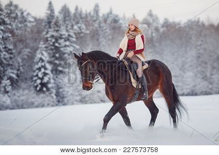 Horse. Girl Rider Rides Brown Horse Through Winter Forest In Snow. Concept Preparation For Competiti