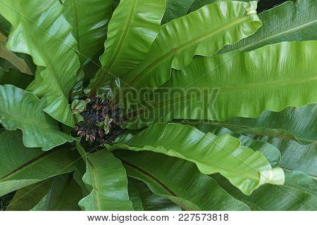 Close Up Image Of Taiwan Cycad (cycas Taiwaniana)