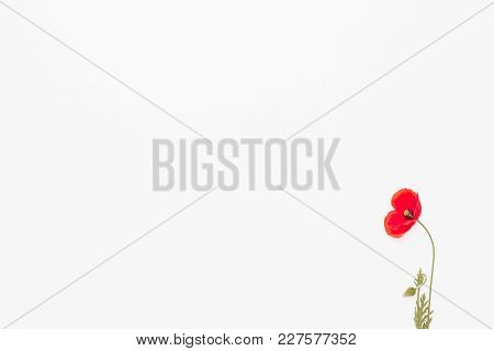 Red Poppies On White Background, Flat Lay