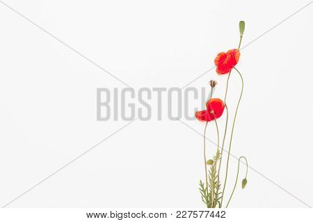 Heads Of Red Weeds On White Background, Flat Lay
