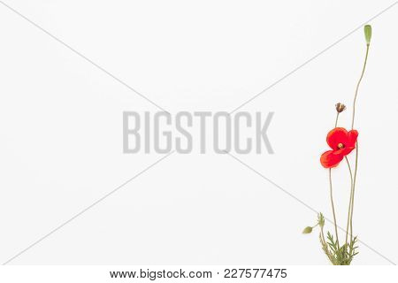 Head Of Red Weed In The Corner Of White Background