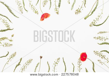 Floral Frame From Summer Field Flowers On White Background