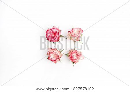 Pink rose flower buds isolated on white background. Flat lay, top view minimal composition.