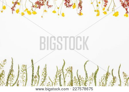 Meadow Flowers In The Bottom With Summer Field Buttercups On Top Of White Background, Flat Lay