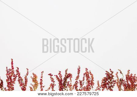Red Summer Flowers In The Bottom Of White Background, Flat Lay