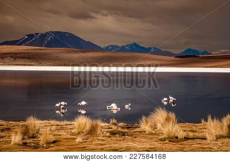 Flamingos In A Lagoon, In The Middle Of The Bolivian Plateau, At 4000 Mt Of Altitude