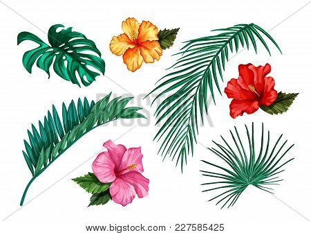 Vector Tropical Leaves Hibiscus Flower Blossom Summer Set. Isolated Background Illustration. Jungle