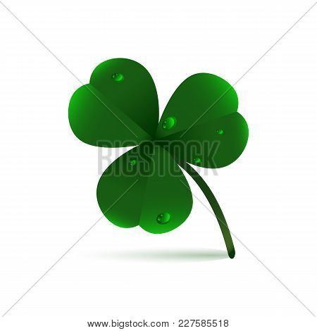 Spring Green Plant Fhree-leafed Clover With Dew, Raindrops Or Waterdrops On White Background. St. Pa
