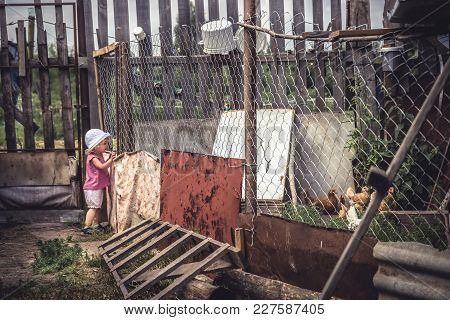 Curiuos Child Watching Chickens In Rustic Poultry House In Countryside Farmyard During Summer Holida